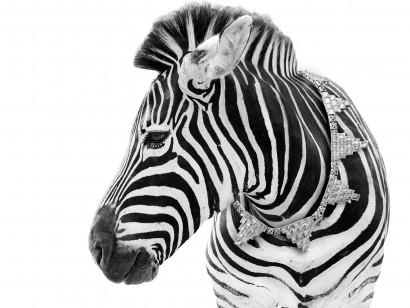 zebra-copy.jpg